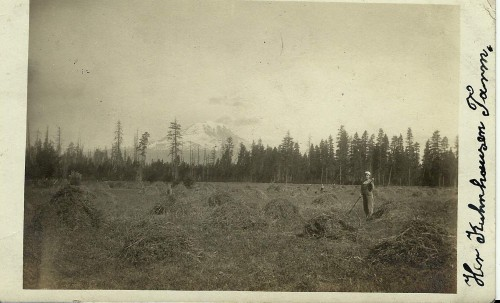 Making hay in the Glenwood Valley of Washington State in 1909. Mount Adams fills the skyline to the west. The worker in front appears to be Rosa Kuhnhausen.