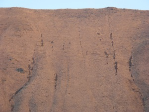 The trace of the bulldozer descent of the north face of Saddle Mountain above Crab Creek. The track is located around nine miles east of the Columbia River. This view is a telephoto image, showing only the upper section of the trace.