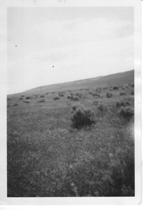 This gentle grassy slope is the site of the Walt Danielson farm on the verge of irrigation in the early 1950s.